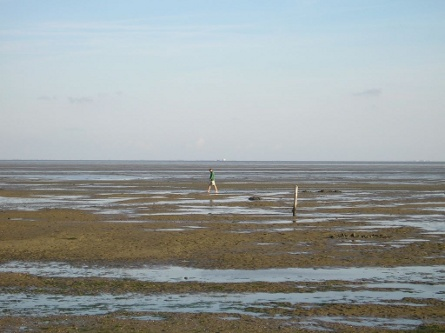 The Wadden
